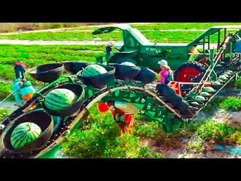 Agricultural Harvest 2021, Quirky Agricultural Harvest Machines, Harvest Pumpkins, Watermelon