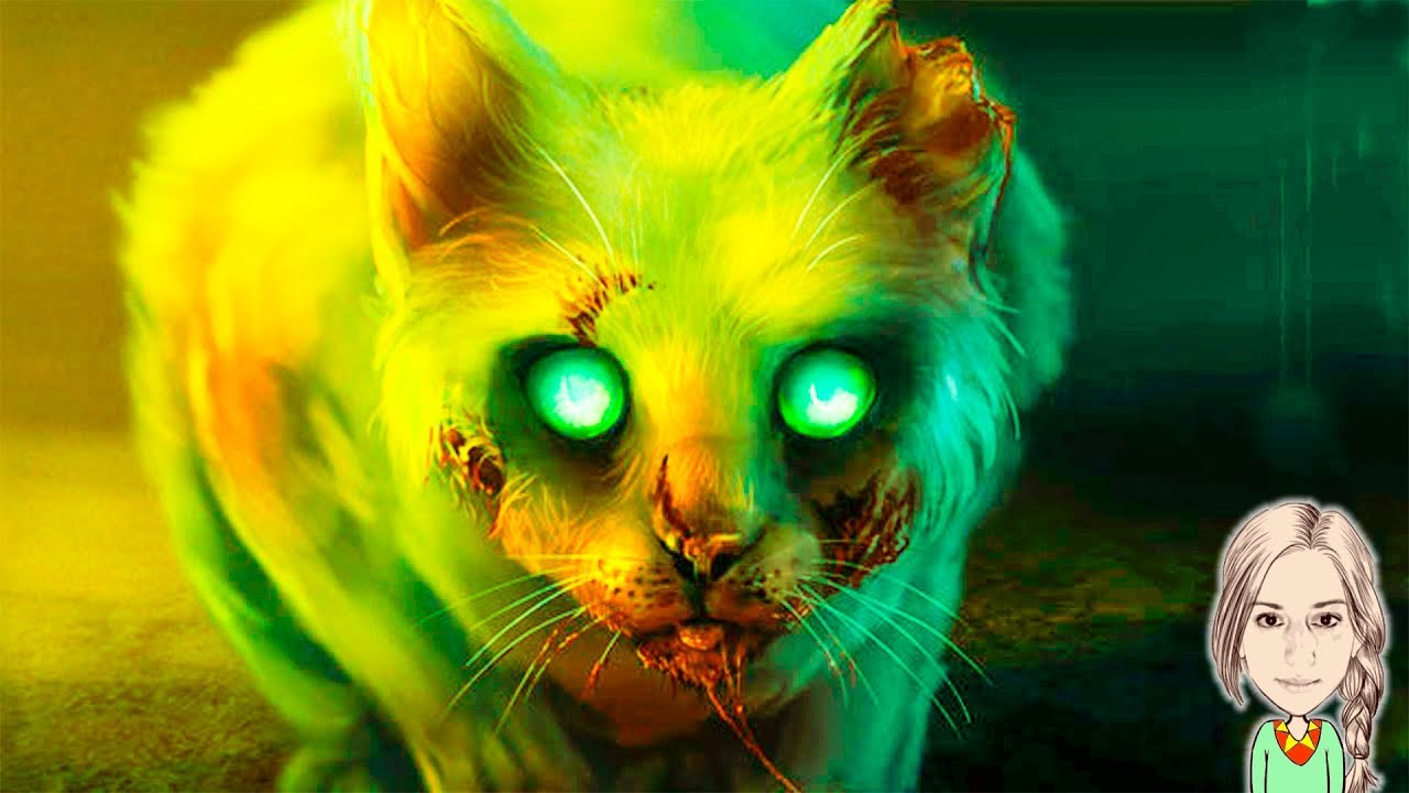 Картинки призраков кошек