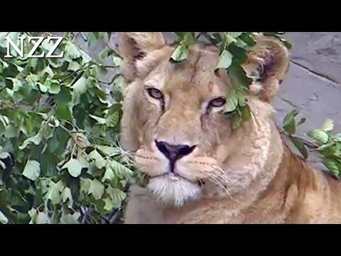 Tag und Nacht im Tierpark Hagenbeck - Dokumentation von NZZ Format (2003)