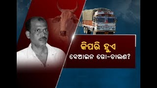 Involvement of Gangster Tito In Cattle Smuggling