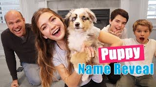 Naming My Puppy! Big Surprise Puppy Name Reveal!