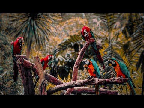 Пение Птиц Поющий РУчей и кРАсивая музыка