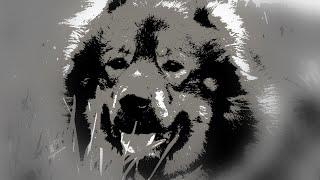 Питомник кавказских овчарок Домбай-Ульген. Кавказская овчарка фото собак. Купить кавказскую овчарку