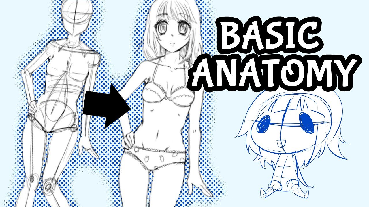 Female Anatomy for Beginners! ☆ Drawing Characters for Manga and ...