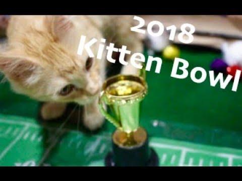 sphynx cat new york