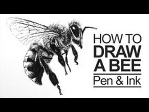 Pen and Ink Lesson - How to Draw a Bee