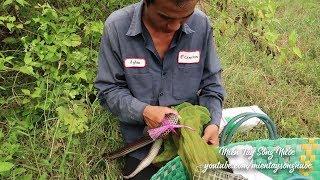 Võ Minh Phụng : Bẫy Rắn Sài Gòn
