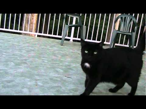 A Stupid Cat Video.
