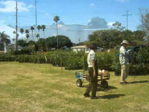 Brevard Tropical Fruit Club 2017