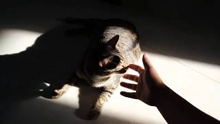 Mèo Ma vs Mốc