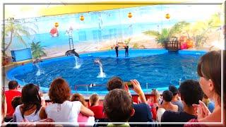 Дельфинарий Морская Звезда в Лазаревском, Сочи.(Впечатляющее шоу с участием морской львицы, черноморских дельфинов-афалин, полярного белого кита и моржей...., 2016-07-12T07:07:00.000Z)