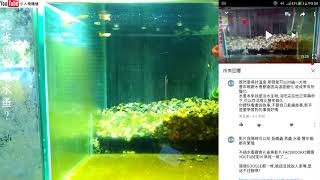來聊聊  孔雀魚  跟  水蚤  跟  豐年蝦