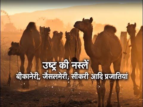 Krishi Darshan - Camel Farming special