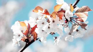 Markus Schulz Feat. Departure - Without You Near Gabriel \u0026 Dresden Remix HD