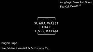 Suara Inap Tiger Dalam
