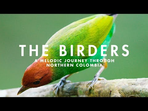 THE BIRDERS  | A Melodic Journey through Northern Colombia Mp3