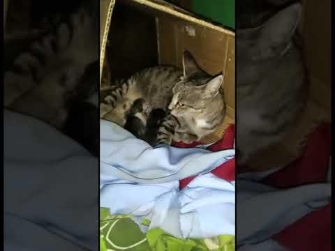 Nama Untuk Kucing Kembar Tiga 81021 Nama Untuk Kucing Comel Lucu Dan Unik