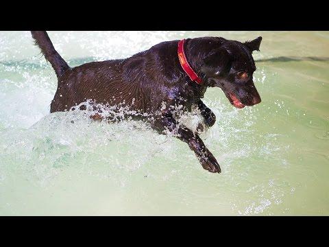 Hundeschwimmbad Frankfurt