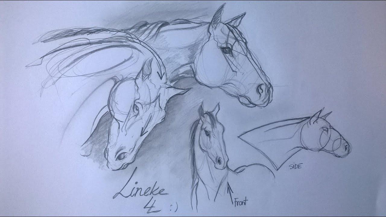 hoe teken je paarden hoofden tekenen tekenles voor