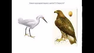 Направления эволюции биологический прогресс и регресс