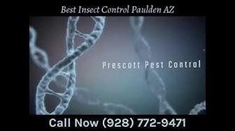 Best Insect Control Paulden AZ