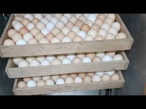 Заложил КУЧУ  яиц на инкубацию!! Думаю мне хватит!!