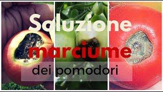 POMODORI: SOLUZIONE AL MARCIUME APICALE | 3 TRUCCHI🍅🍅🍅
