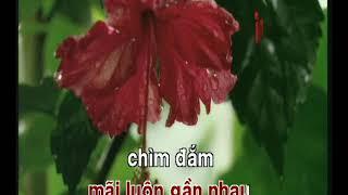 NHỮNG MÙA XUÂN DỊU DÀNG LÊ QUANG karaoke Nhac Xuan