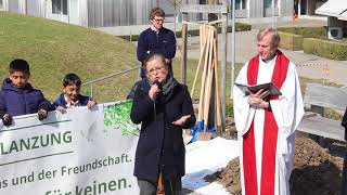 Peace tree plantation in St  Gallen Switzerland