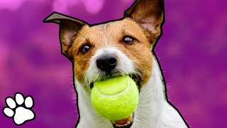 Animals Playing Sports | Trained Pet Videos | That Pet Life