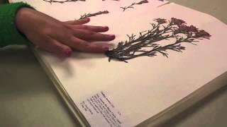 CSU Herbarium Short