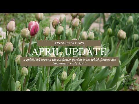 MORE SPRING BLOOMS! APRIL 2021 CUT FLOWER GARDEN