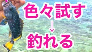 【沖縄釣り】沖縄ウェーディング最強ルアーはどれだ!気になるルアーを色々試した結果 スイム映像あり レイクミノー 3DSミノー70SP メバミノーJT ジョイントベイト72SF【沖縄ルアー】