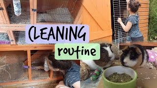 GUINEA PIG CLEANING ROUTINE | Hamster HorsesandCats