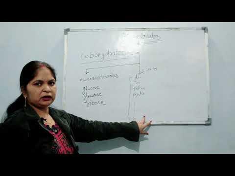 Biomolecules//class 12//part-1// HD