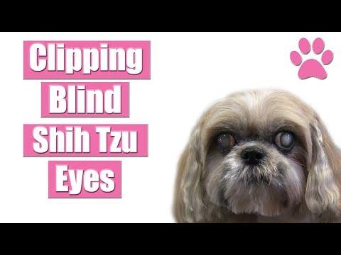 Clipping Underneath Blind Shih Tzu Eyes