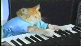 Play Him off Keyboard Cat - Kevin Rudd