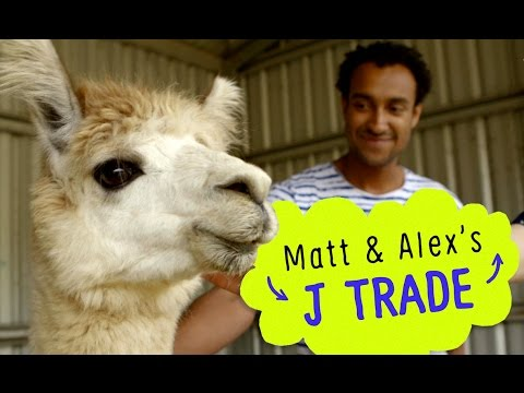 triple j trade Pokemon card for an alpaca