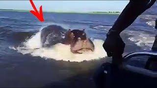 Бегемот напал на туристов в лодке! Туристы едва не стали жертвой бегемота  Ужас!
