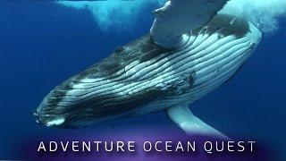 ► Adventure Ocean Quest - The Giants of Rurutu (FULL Documentary)