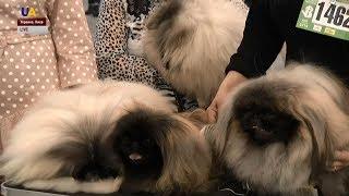 В Киеве проходит международная выставка собак