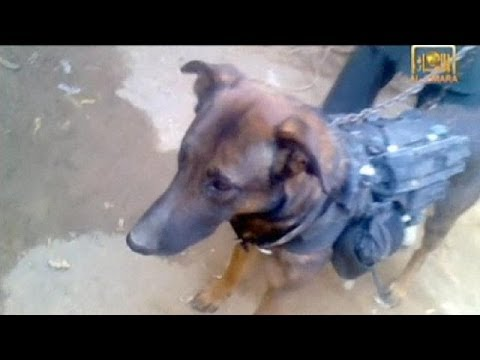 Taliban put on show dog which it claims worked for ISAF