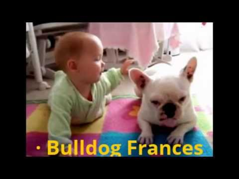 Razas de Perros Pequeños para Niños | Las Mejores Razas de Perros Niñeros