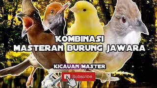 Gambar cover Kombinasi masteran burung juara