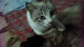 Кошачий эротический массаж