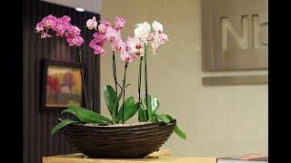 5 лучших РОЗОВЫХ ОРХИДЕЙ | Какие ОРХИДЕИ цветут розовыми цветками, фото и описание