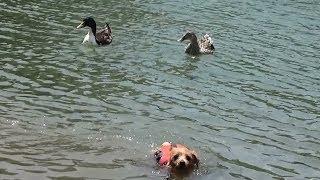 ちゃい「近づきたい・・・もっと近づきたい・・・」 鳥「アイツ、こっち...