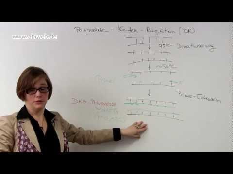 Biologie online lernen: Polymerase-Kettenreaktion (PCR)