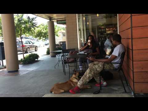 15 Minute Hold while out for Coffee! (x8) | Doberman | Georgia's Best Dog Trainers
