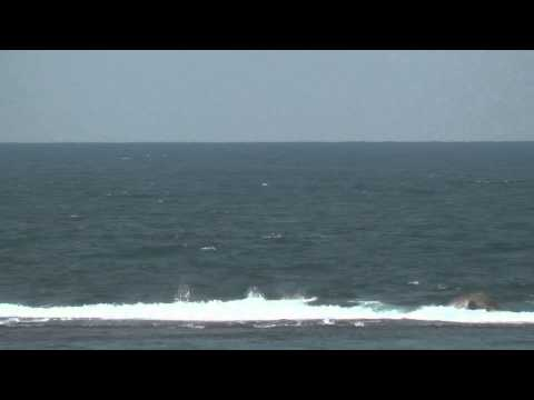 Zavora 1  humpback whales